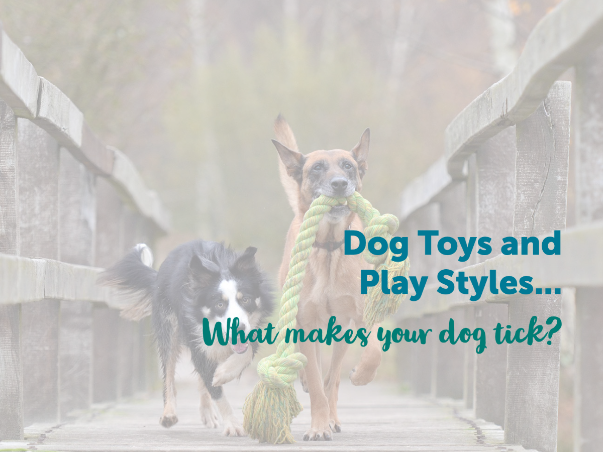 Dog Toys and Play Styles